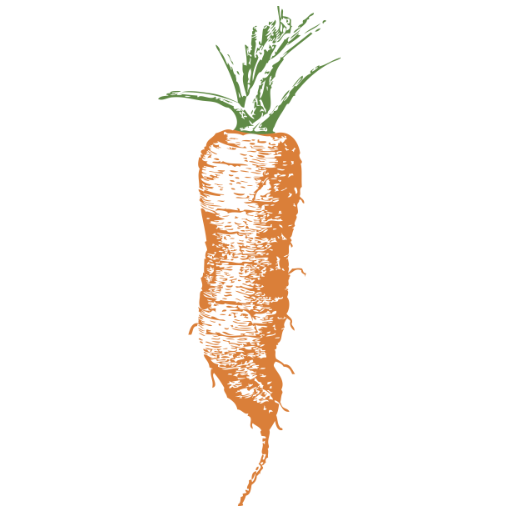 a sketch of a carrot from The Book of Vegetables (1907)